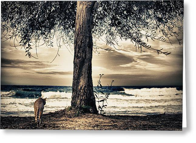 Fall Grass Greeting Cards - The Cat And The Sea Greeting Card by Stylianos Kleanthous