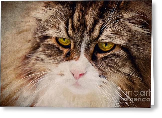 Soft Fur Greeting Cards - The Cat Greeting Card by Angela Doelling AD DESIGN Photo and PhotoArt