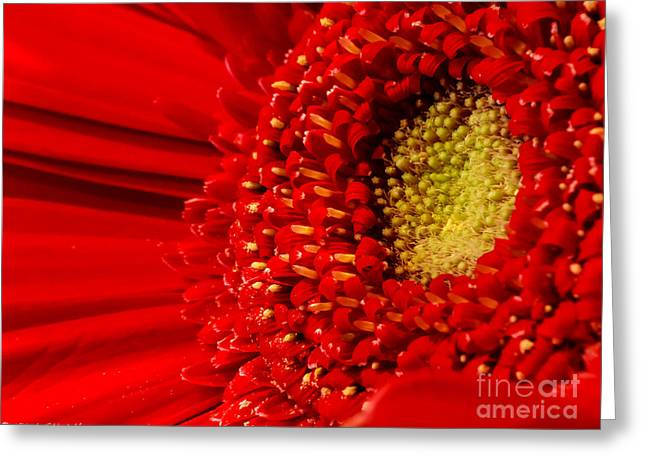 The Nature Center Greeting Cards - The Center  Greeting Card by Mitch Shindelbower