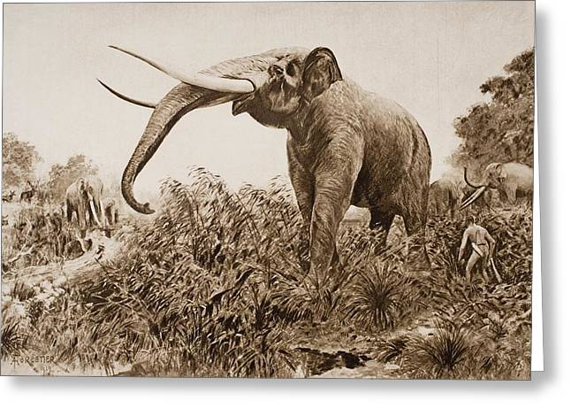 Chatham Greeting Cards - The Chatham Elephant. From Fossil Greeting Card by Ken Welsh