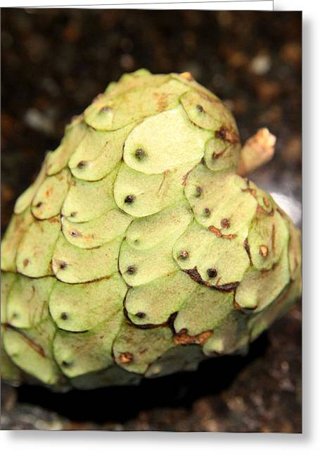 Cherimoya Photographs Greeting Cards - The Cherimoya Greeting Card by Enzie Shahmiri