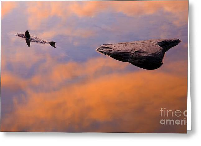 Coho Salmon Greeting Cards - The Circle of Life Greeting Card by Mike  Dawson