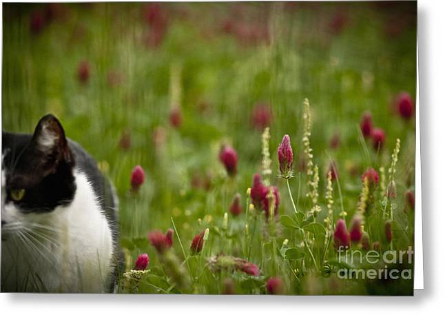 The Clover Field Greeting Card by Kim Henderson
