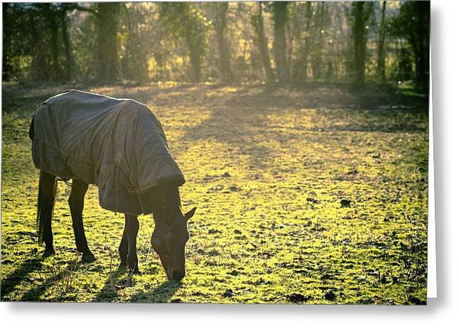 Dreamy Art Greeting Cards - The Cold Horse Greeting Card by Justin Albrecht