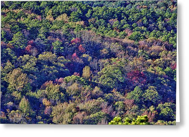 The Colors Of Autumn Greeting Card by Douglas Barnard