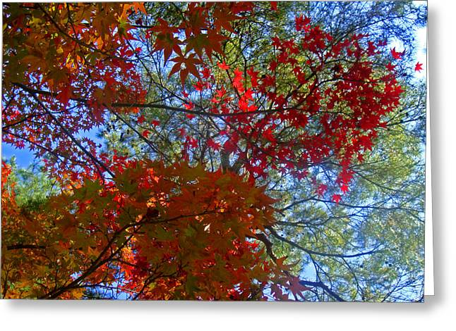 Roberto Alamino Greeting Cards - The Colors of Autumn Greeting Card by Roberto Alamino