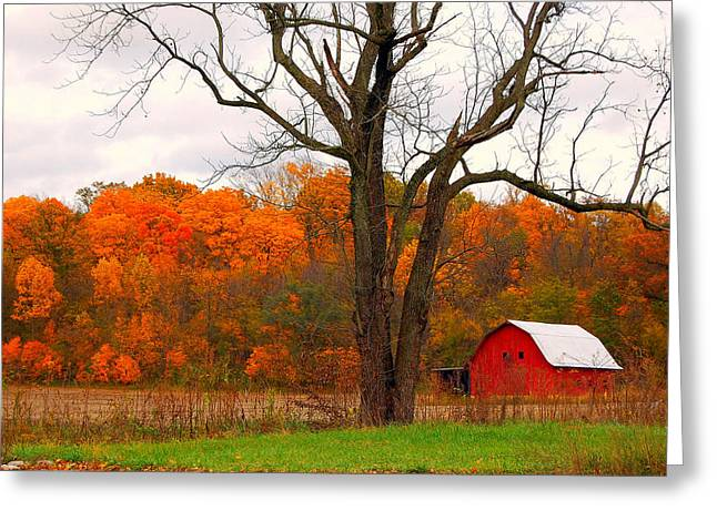 The Colors Of Fall Greeting Card by Robin Pross
