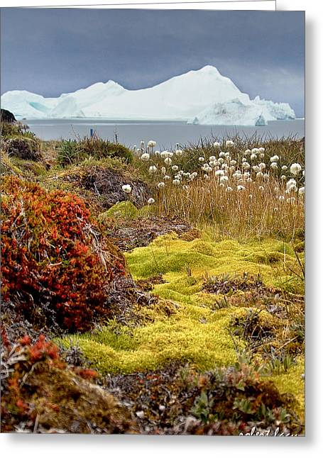 Greenland Greeting Cards - The Colors of Greenland Greeting Card by Robert Lacy