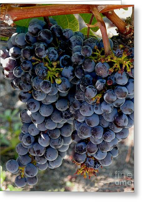 Concord Grapes Greeting Cards - The Concord Greeting Card by Richard Ortolano