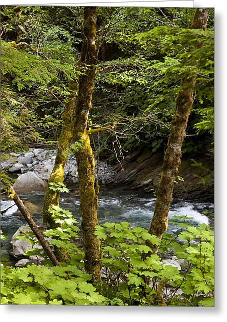 Clean Water Greeting Cards - The Cool Clean Waters Of Thorsen Creek Greeting Card by Taylor S. Kennedy