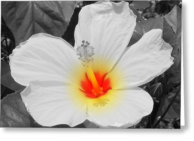 The Nature Center Greeting Cards - The Core Greeting Card by Sherwanda Irvin