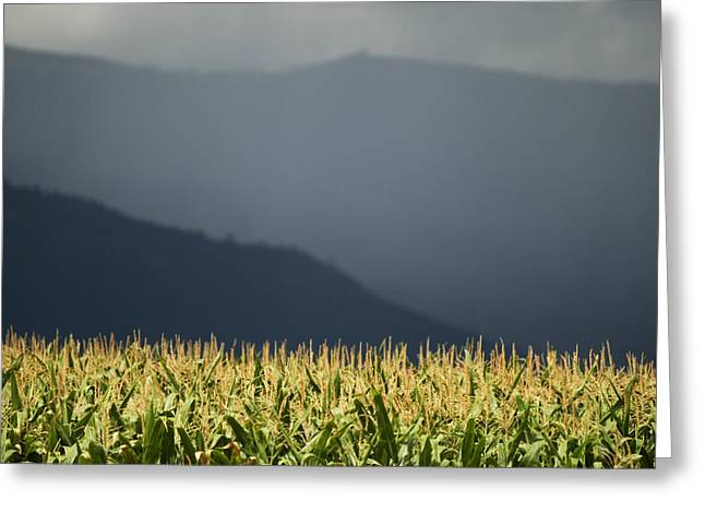 Cornfield Greeting Cards - The Cornfield Greeting Card by Peter Olsen