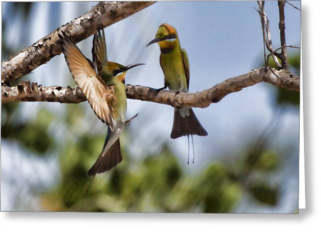 Top-end Greeting Cards - The Courtship Greeting Card by Douglas Barnard
