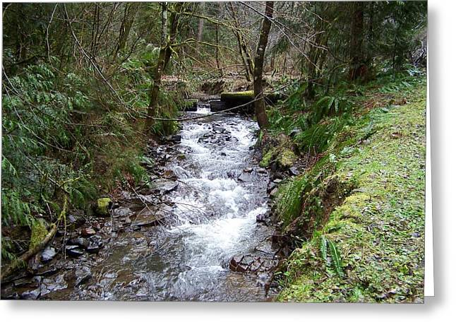 Stream Pyrography Greeting Cards - The Creek Greeting Card by Laurie Kidd