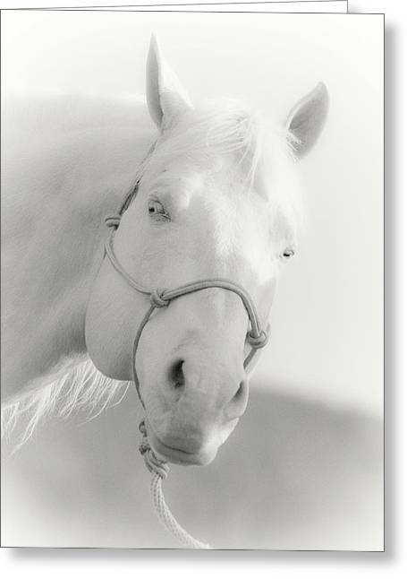 Quarter Horses Greeting Cards - The Cremello Greeting Card by Katie Abrams
