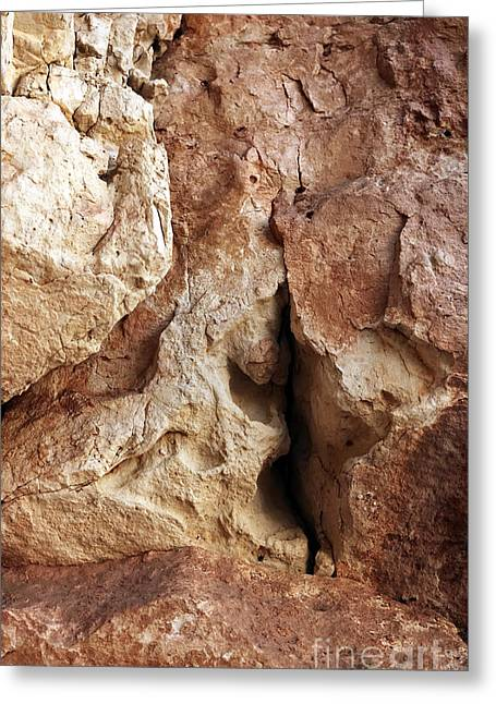 Forest Dweller Greeting Cards - The Crevice Greeting Card by John Rizzuto