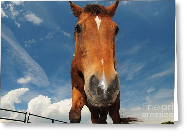 The Curious Horse Greeting Card by Paul Ward