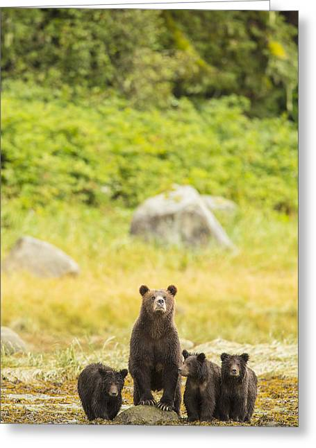 Prints Of Alaska Greeting Cards - The Curious Mom Greeting Card by Tim Grams