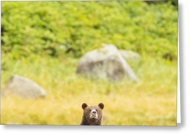 The Curious Mom Greeting Card by Tim Grams