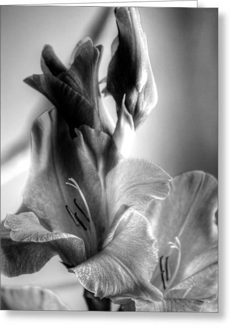 Gladiolas Greeting Cards - The Dance Greeting Card by Deborah  Crew-Johnson