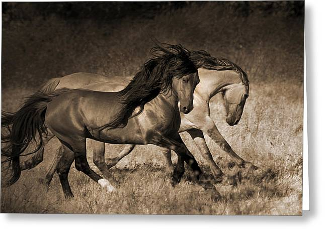 Wild Horse Greeting Cards - The Dance Greeting Card by Lisa Dearing