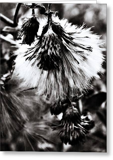 Yellow Flowers Framed Prints Greeting Cards - The Dandies Manes Greeting Card by Jerry Cordeiro