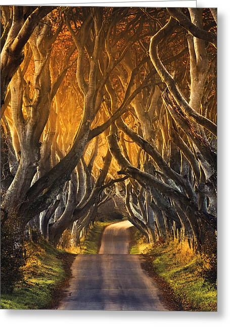 Tress Greeting Cards - The Dark Hedges III Greeting Card by Pawel Klarecki