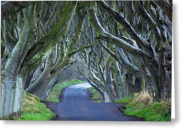 The Dark Hedges Greeting Cards - The Dark Hedges. Greeting Card by Martine Maclennan