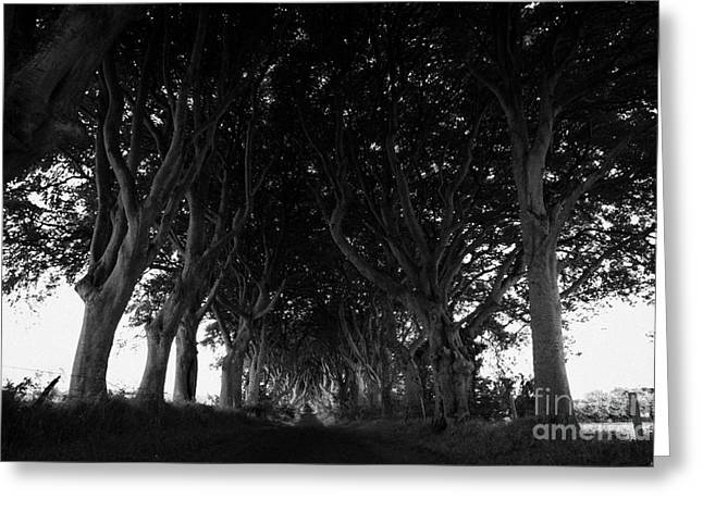 Dark Hedges Greeting Cards - The Dark Hedges Old Avenue Of Beech Trees Which Have Overgrown The Road Armoy County Antrim Ireland Greeting Card by Joe Fox