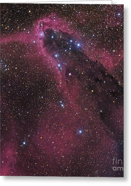 Twinkle Greeting Cards - The Dark Tower, Cometary Globule Greeting Card by Don Goldman