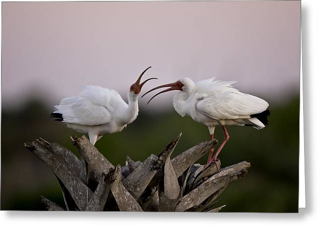 The Debate Greeting Card by Rob Travis
