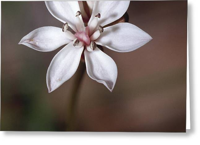 The Delicate Pastel Pink Flower Greeting Card by Jason Edwards