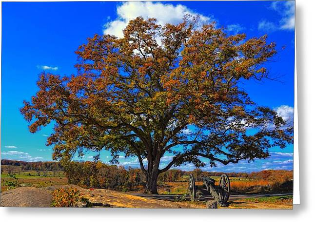 Devils Den Greeting Cards - The Devils Den witness tree. Greeting Card by Dave Sandt