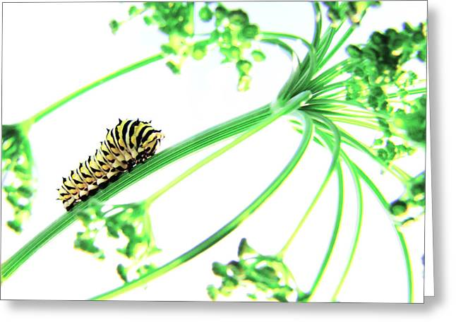 Swallowtail Greeting Cards - The Dill Express Greeting Card by Amy Tyler