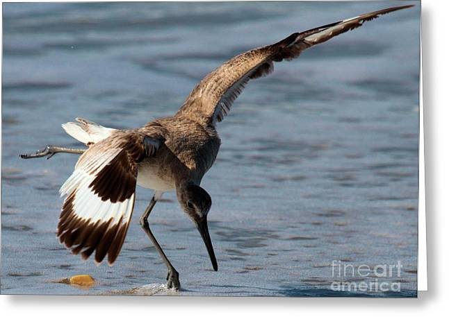 Cape Hatteras National Seashore Greeting Cards - The Dinner Dance Greeting Card by Adam Jewell