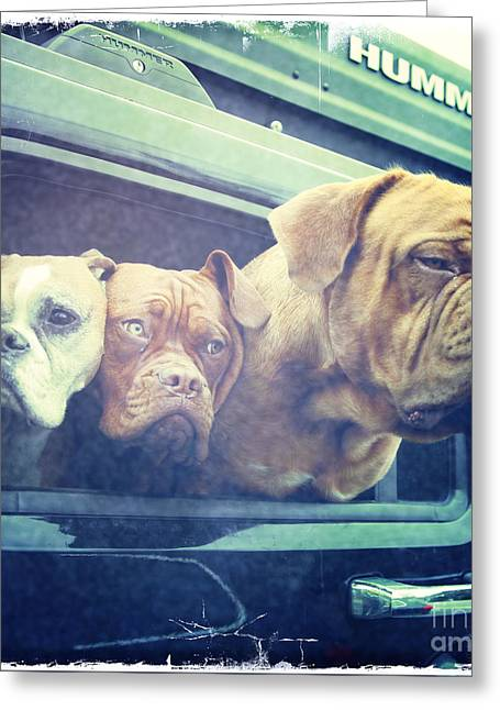 Puppies Photographs Greeting Cards - The Dog Taxi Is A Hummer Greeting Card by Nina Prommer