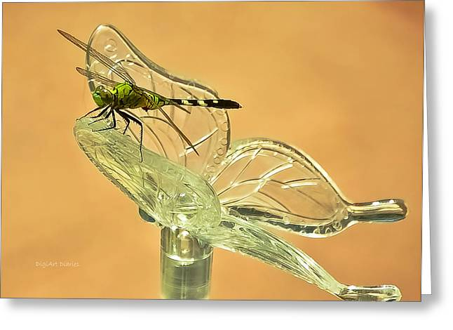 Black Olives Greeting Cards - The Dragonfly and The Butterfly Greeting Card by DigiArt Diaries by Vicky B Fuller