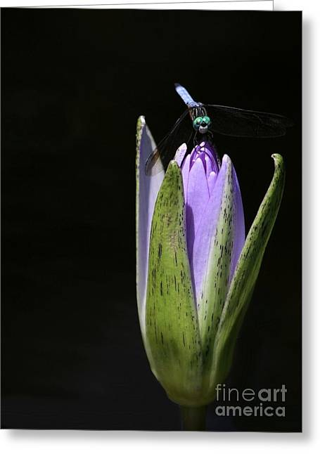 Lotus Bud Greeting Cards - The Dragonfly and the Water Lily  Greeting Card by Sabrina L Ryan