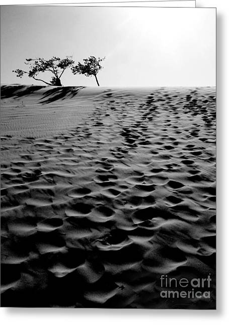 Sand Patterns Greeting Cards - The Dunes at Dusk Greeting Card by Tara Turner