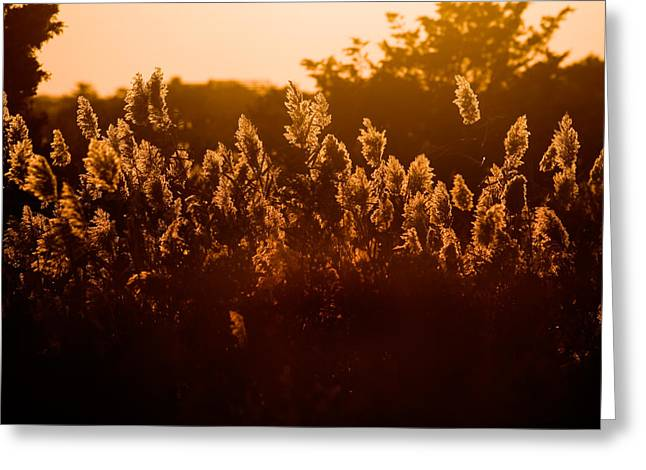 Fire Island Greeting Cards - The Dunes- Fire Island Greeting Card by Rick Berk
