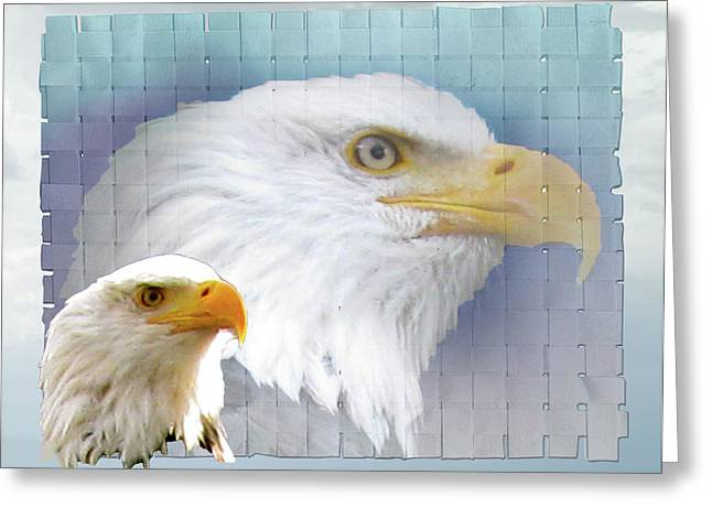 Flocks Of Birds Mixed Media Greeting Cards - The Eagles Focus Greeting Card by Debra     Vatalaro