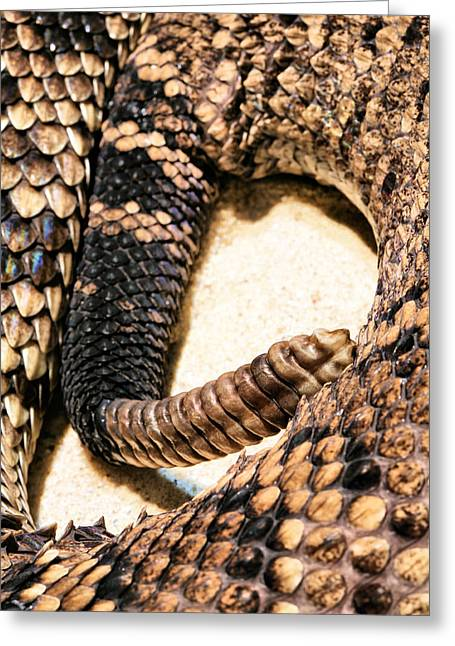 Rattle Snakes Greeting Cards - The Early Warning System  Greeting Card by JC Findley