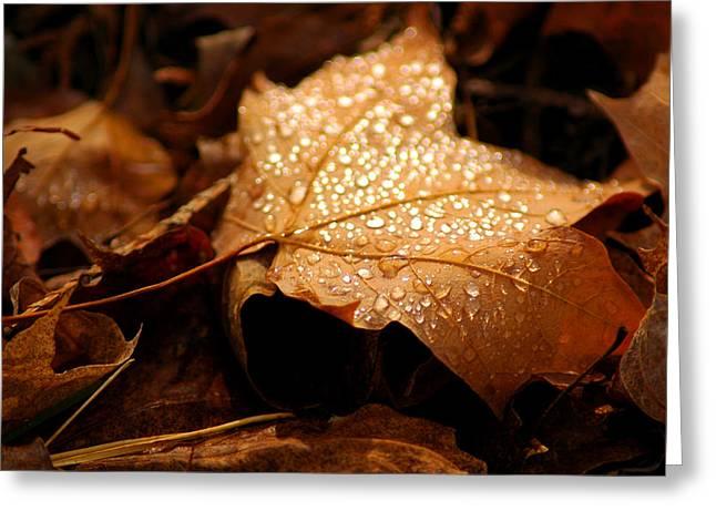 The enlightened Maple leaf Greeting Card by LeeAnn McLaneGoetz McLaneGoetzStudioLLCcom