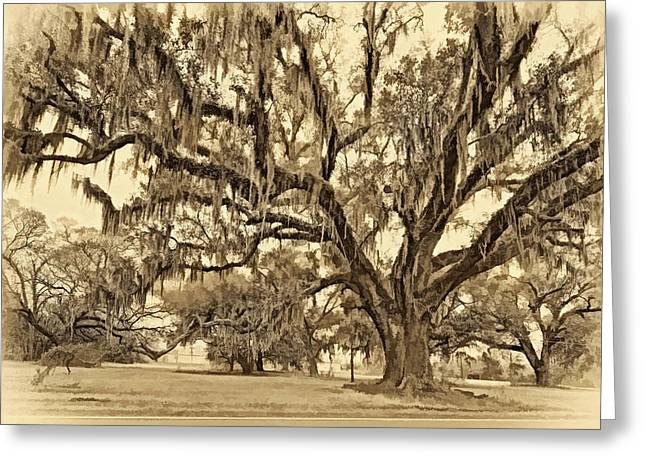 Oak Alley Plantation Greeting Cards - The Essence sepia Greeting Card by Steve Harrington