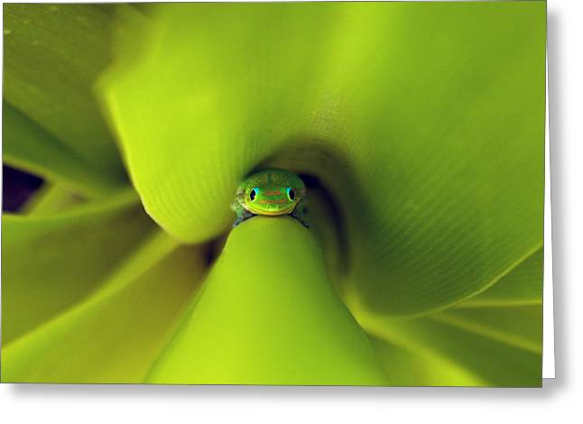 The Eyes Have It Greeting Card by Brian Governale