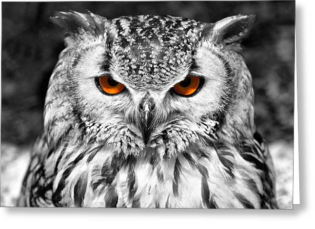 Owl Eyes Greeting Cards - The Eyes have it Greeting Card by Chris Thaxter