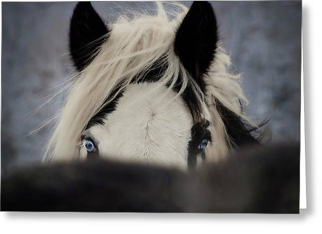 Romany Greeting Cards - The Eyes Have It Greeting Card by Elizabeth Sescilla