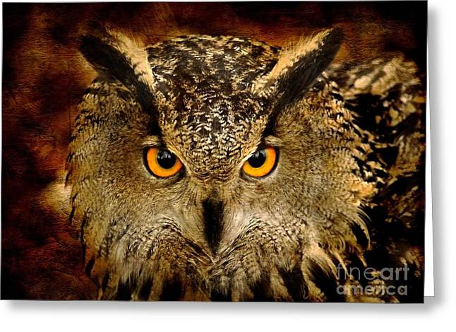 Bird Of Prey Greeting Cards - The Eyes Greeting Card by Photodream Art