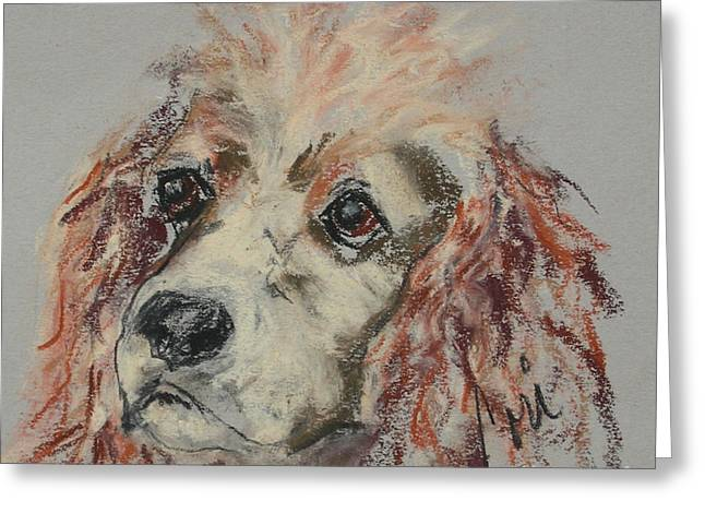 Puppies Pastels Greeting Cards - The Eyes Tell It All Greeting Card by Cori Solomon