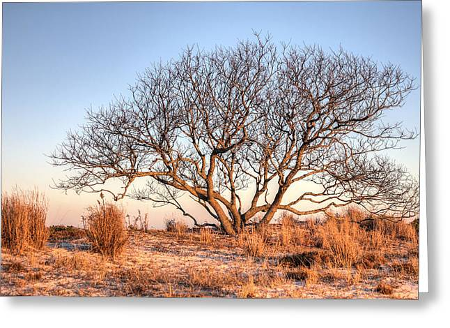 The Family Tree Greeting Card by JC Findley